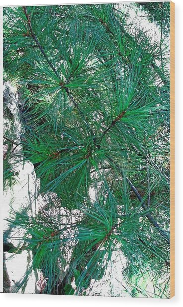 Pine With Rocks Wood Print by Suzanne Fenster