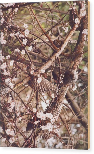 Pinecones And Cherry Blossoms Wood Print