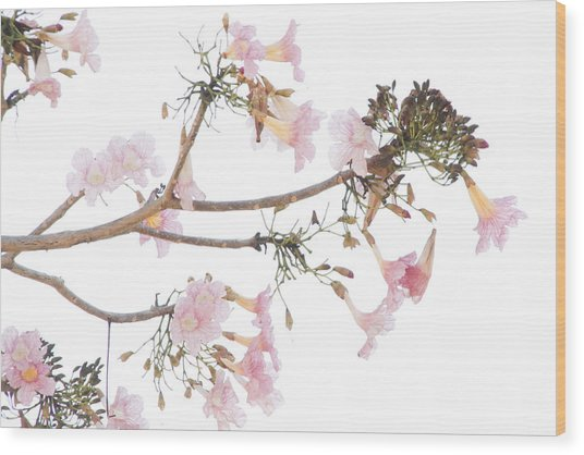 Pink Blossoms In Panama Wood Print