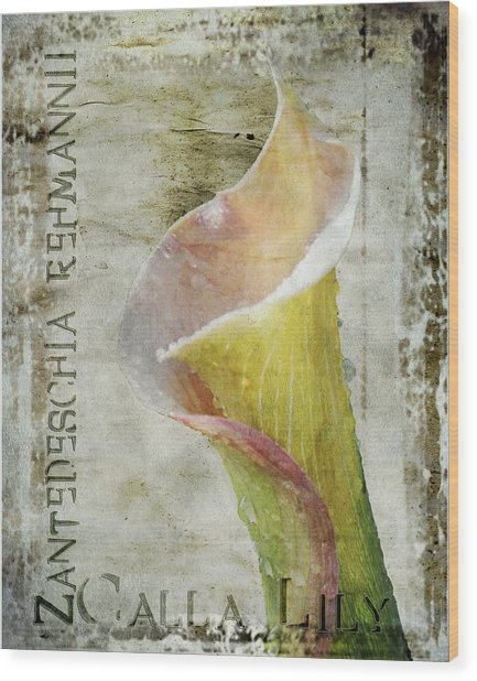 Pink Calla Lily Wood Print