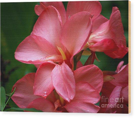 Pink Canna Wood Print