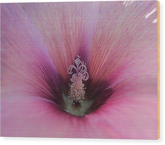 Pink Celebration Wood Print by Beth Akerman
