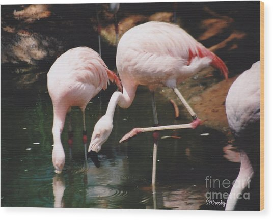 Pink Flamingos Wood Print