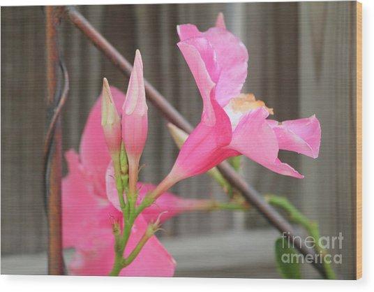 Pink Hibiscus 1 Wood Print