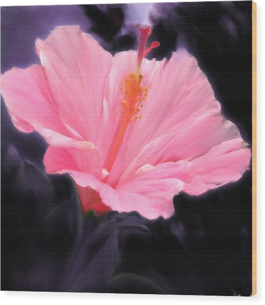 Pink Hibiscus Wood Print by Marcos Porcayo