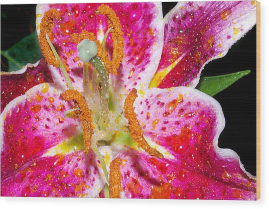 Pink Lilly In The Rain Wood Print by Michelle Armstrong