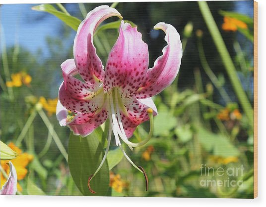 Pink Lily Wood Print by Theresa Willingham