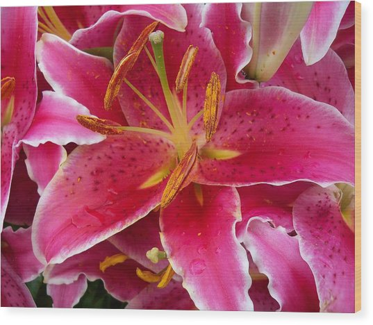 Pink Lily With Water Droplets Wood Print