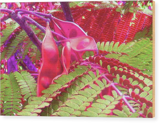 Pink Mimosa Wood Print by Juliana  Blessington
