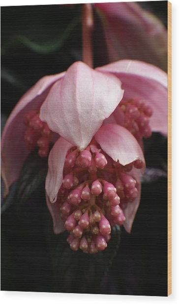 Pink Orchid Wood Print by Margaret Steinmeyer