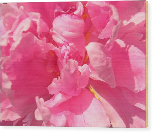 Pink Peony Wood Print by Tina Ann Byers