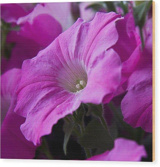 Pink Petunia II Wood Print