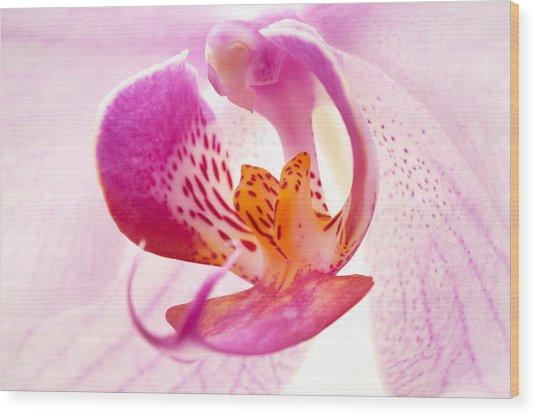 Pink Phalaenopsis Wood Print