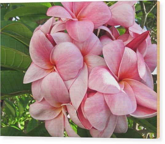 Pink Plumerias Wood Print