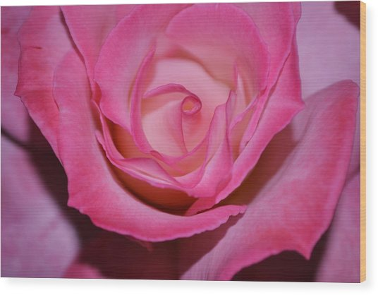 Pink Rose Wood Print by Saifon Anaya