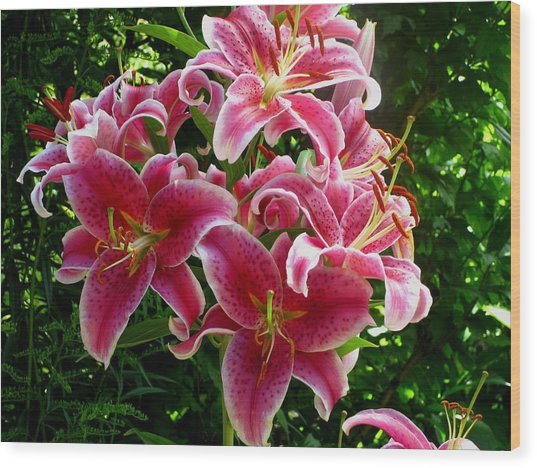 Pink Tiger Lilies Wood Print by Kathy Long