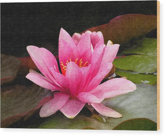 Pink Water Lily Wood Print by Design Windmill