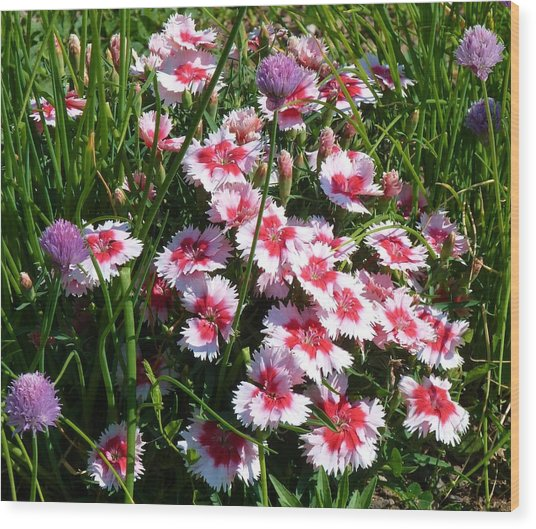 Pinks In The Clover Grass Wood Print by Jeanette Oberholtzer