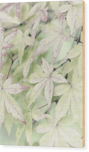 Pistachio Maple Wood Print by David Lade