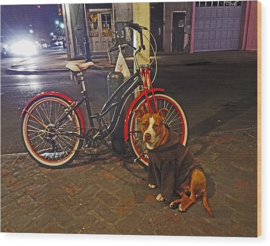 Pit Bull In A Hoodie In The French Quarter Of New Orleans Wood Print