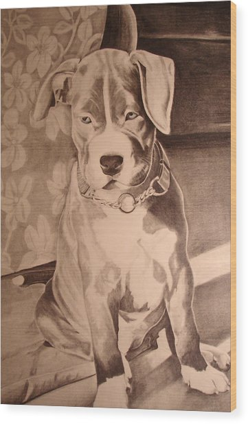 Pitty Pet Portrait Wood Print by Yvonne Scott