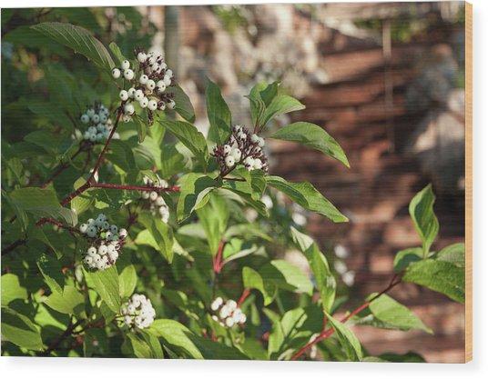Plants Beside Beaver Creek Villa Wood Print