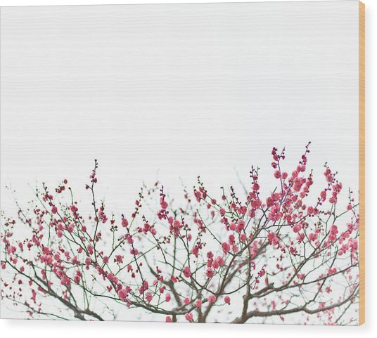 Plum Blossoms Wood Print