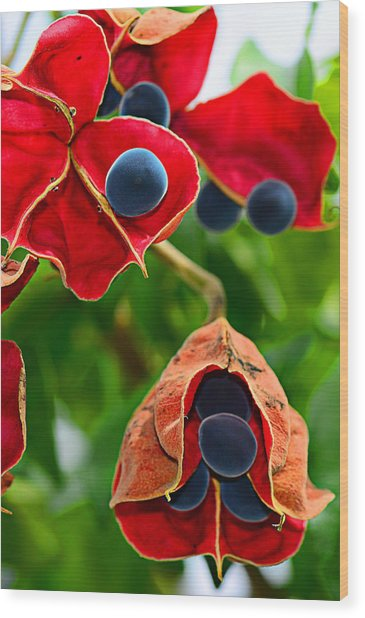 Pods Wood Print by Michelle Armstrong