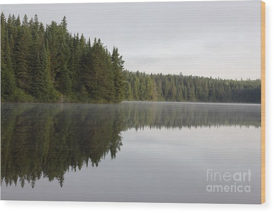 Pog Lake Tree Line Wood Print by Chris Hill
