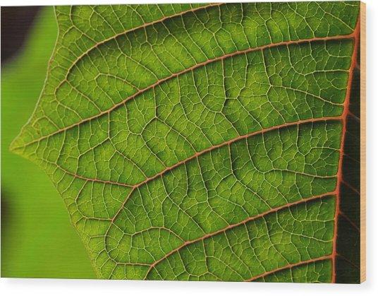 Poinsettia Leaf I Wood Print