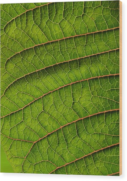 Poinsettia Leaf II Wood Print