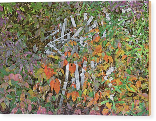 Poison Ivy And Pickets Wood Print