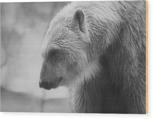 Polar Bear 7 Wood Print