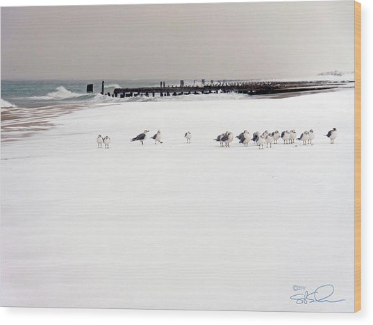 Polar Bird Club Wood Print