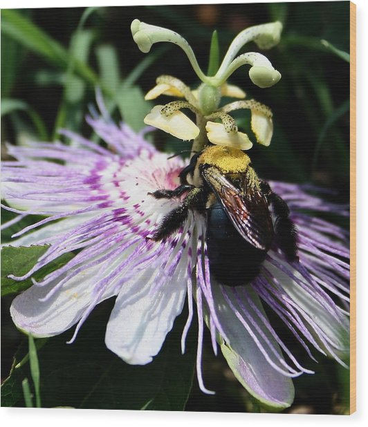 Pollen Collector Wood Print