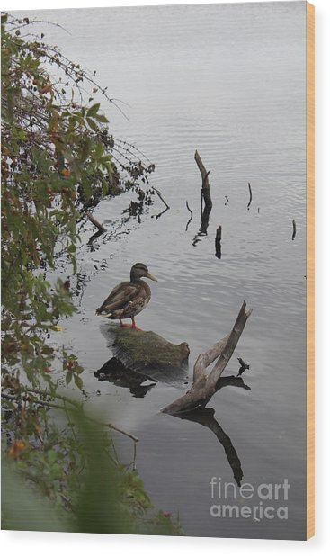 Pond-ering Wood Print by Scenesational Photos