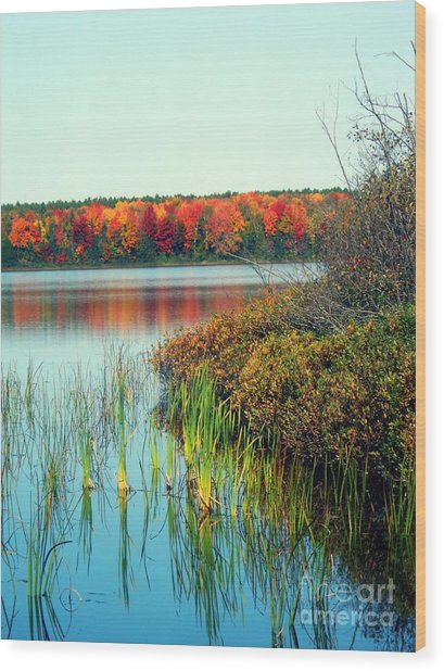 Pond In The Woods In Autumn Wood Print