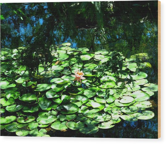Pond With With Pond Lilly Wood Print by David Killian