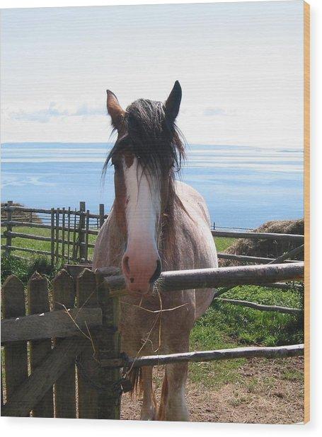 Pony At Highland Village Wood Print