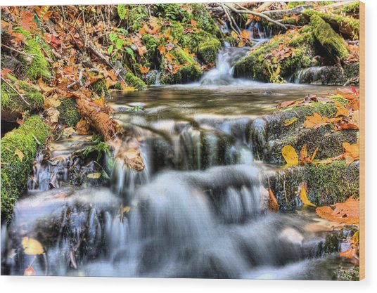 Pooling Resources Wood Print by JC Findley