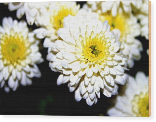 Popcorn Flowers Wood Print by Hannah Miller