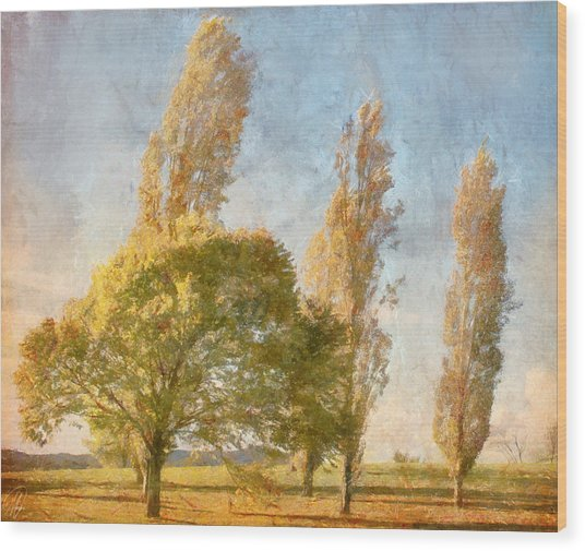 Poplars Wood Print