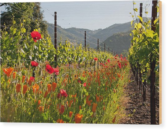 Poppies In The Vineyard Wood Print by Kent Sorensen