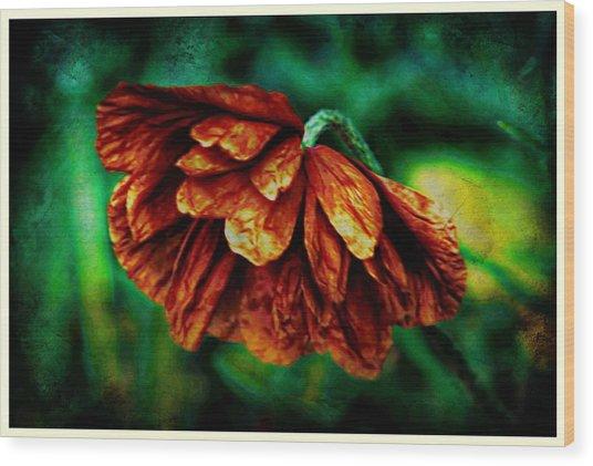 Poppy Art Wood Print by Jennifer Kosminskas