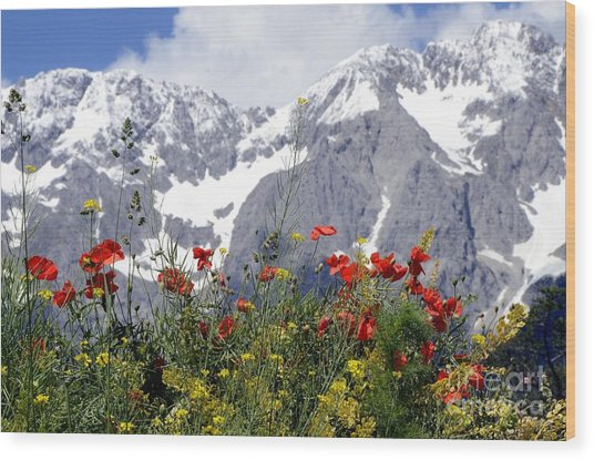 Poppy Flowers Under The Mountains Wood Print