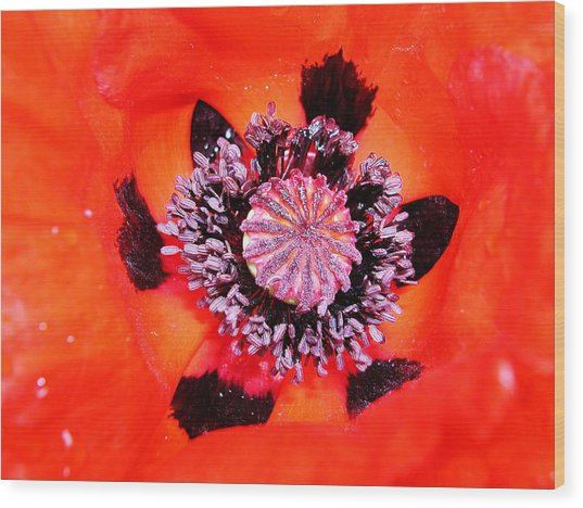 Poppy's Heart Wood Print