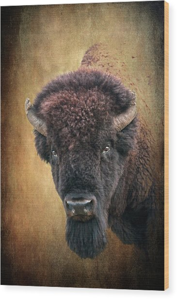 Portrait Of A Buffalo Wood Print