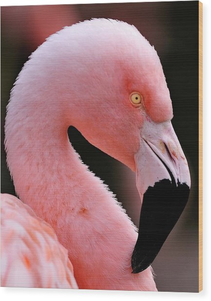 Portrait Of A Flamingo Wood Print