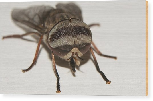 Portrait Of A Fly Wood Print