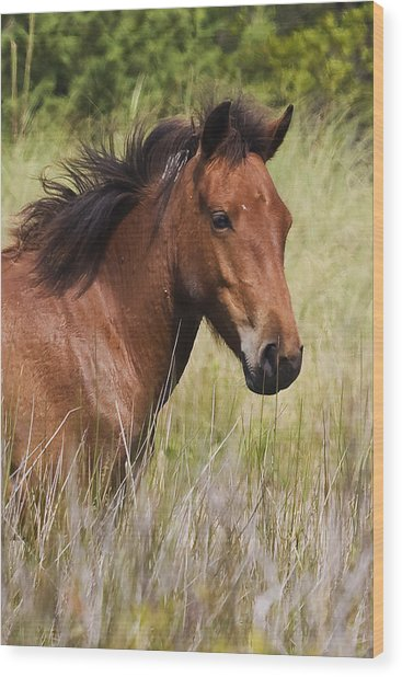 Portrait Of A Spanish Mustang Wood Print